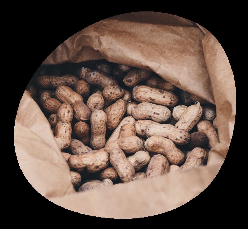 Blog Peanuts